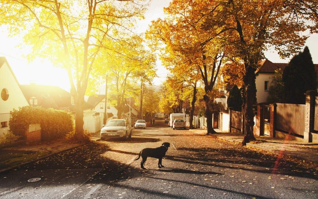 Nextdoor Part 3   Five Tips on How to Use Nextdoor for Business Efficiently